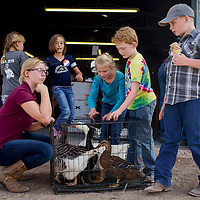 Brandon Small, right, and a group of other kids stop to check out the geese and ducks that Lennorré Dubé, left, brought to enter in the Bi-County Thursday in Prewitt. The annual fair kicks off Friday and runs though the weekend.