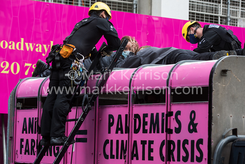 British Transport Police officers attend to animal rights activists from Animal Rebellion who had locked themselves to the top of and inside a pink slaughterhouse truck in order to block the road outside the Department of Health and Social Care on 3 September 2020 in London, United Kingdom. Animal Rebellion activists are protesting in solidarity with victims of the global food system and to demand that the UK transitions to a sustainable plant-based food system.