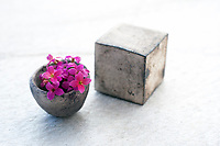 Square And Circle  with little flowers on a white stone background. Still Life Photography. Ceramic cube and Ammonite Nautilus