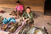15 MARCH 2013 - ALONG HIGHWAY 13, LAOS:  A woman sells bush meat in a small village on Highway 13 north of Luang Prabang. The animals cost about 300,000 Lao Kip each (about $42 US). The paving of Highway 13 from Vientiane to near the Chinese border has changed the way of life in rural Laos. Villagers near Luang Prabang used to have to take unreliable boats that took three hours round trip to get from the homes to the tourist center of Luang Prabang, now they take a 40 minute round trip bus ride. North of Luang Prabang, paving the highway has been an opportunity for China to use Laos as a transshipping point. Chinese merchandise now goes through Laos to Thailand where it's put on Thai trains and taken to the deep water port east of Bangkok. The Chinese have also expanded their economic empire into Laos. Chinese hotels and businesses are common in northern Laos and in some cities, like Oudomxay, are now up to 40% percent. As the roads are paved, more people move away from their traditional homes in the mountains of Laos and crowd the side of the road living off tourists' and truck drivers.   PHOTO BY JACK KURTZ