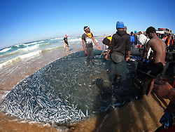 South Africa - Durban - 21 June 2020 - There is been spearfishing among the shoals of sardines were sighted near Pennington beach, Scottburgh, KwaZulu-Natal, on Sunday, June. They were surrounded by dolphins, sharks and gannets that were pursuing the sardines.<br /> Picture: Motshwari Mofokeng/African News Agency (ANA)