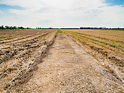 14 JULY 2015 - THAILAND: Parched farm land in Pathum Thani province. The drought that has crippled agriculture in central Thailand is now impacting residential areas near Bangkok. The Thai government is reporting that more than 250,000 homes in the provinces surrounding Bangkok have had their domestic water cut because the canals that supply water to local treatment plants were too low to feed the plants. Local government agencies and the Thai army are trucking water to impacted communities and homes. Roads in the area have started collapsing because of subsidence caused by the retreating waters. Central Thailand is contending with drought. By one estimate, about 80 percent of Thailand's agricultural land is in drought like conditions and farmers have been told to stop planting new acreage of rice, the area's principal cash crop.       PHOTO BY JACK KURTZ