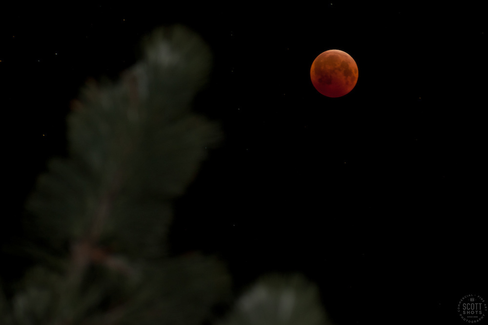 """""""Total Lunar Eclipse on Winter Solstice 3"""" This very special total lunar eclipse was photographed on 12-21-2010 in the Tahoe Donner area of Truckee, CA."""