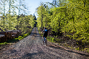 """A mountain biker riding in the Taunus forest towards the mountain top """"Feldberg"""". The Taunus is a mountain range in Hessen, Germany, located north of Frankfurt."""