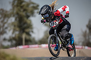 #155 (MECHIELSEN Drew) CAN during practice at Round 9 of the 2019 UCI BMX Supercross World Cup in Santiago del Estero, Argentina