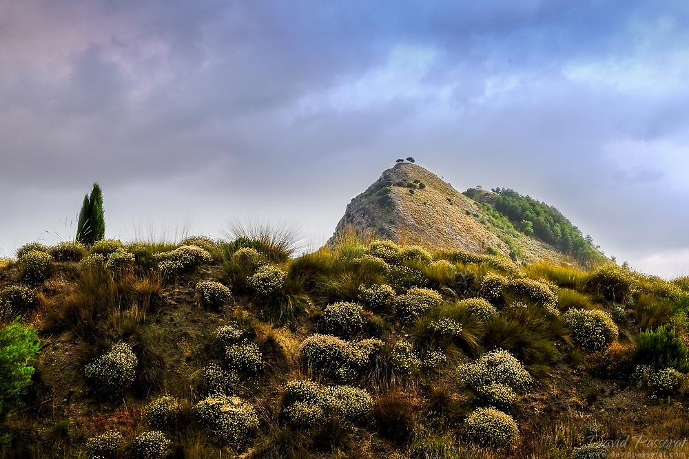 Landscape of bushes ant hill.