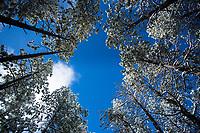 Spring snowfall in in the Jemez Valley, NM.