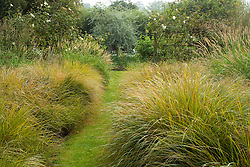 Grass path lined with Stipa arundinacea