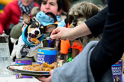 """© Licensed to London News Pictures. 10/03/2019. LONDON, UK. A dog being fed as Pro-Remain owners bring their dogs to Victoria Park Gardens, next to the Houses of Parliament, for """"Brexit is a Dog's Dinner"""", a protest to urge MPs to vote to ensure that a no-deal Brexit is avoided and to give the people of the UK a final say.  Next week, there will be a series of up to three votes in the House of Commons where MPs will vote on whether to accept Theresa May's Brexit deal.  Photo credit: Stephen Chung/LNP"""