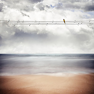 Landscape view of a calm sea with a yellow bird sitting on wires with notes