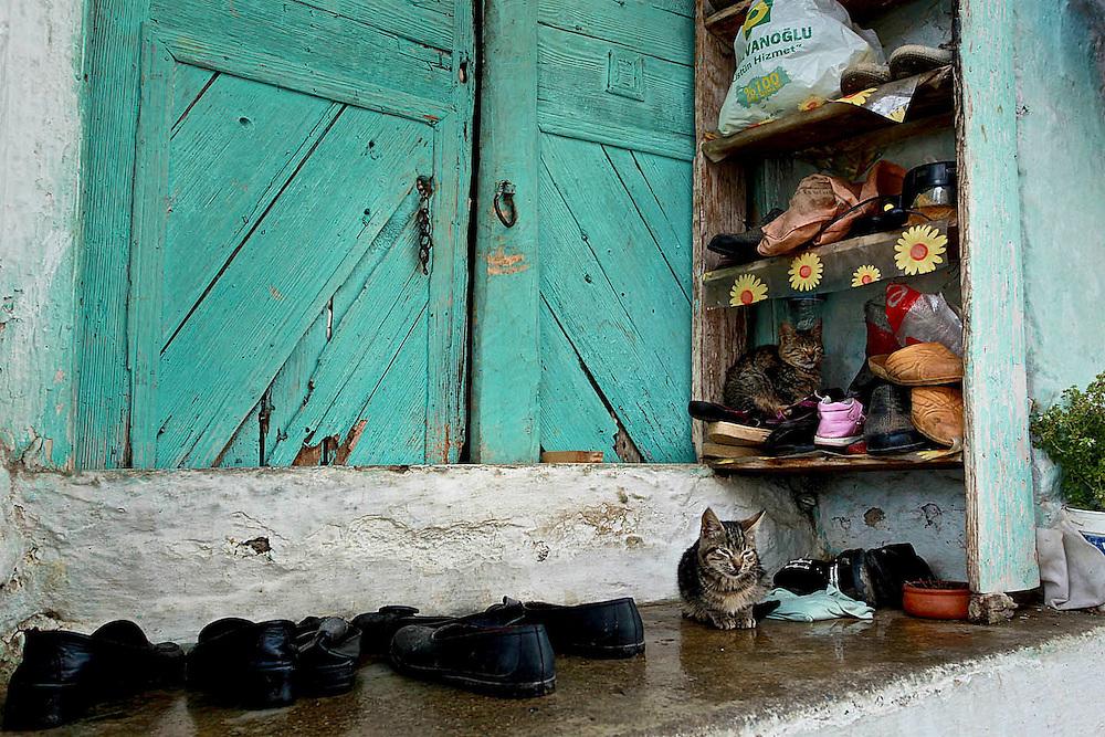 Cat on door stoop Kusadasi Turkey