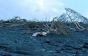 New larva flow, Mount Kilauea Volcano, Hawaii, 1990 eruption, Pahoehoe Lava, active, shield volcano