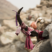 Horn of an ibex. Pre-Islamic shrine named Shams Kadamga. The traditional life of the Wakhi people, in the Wakhan corridor, amongst the Pamir mountains.