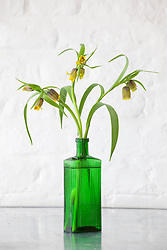 Fritillary in green glass poison bottle