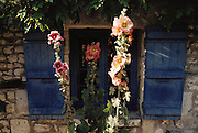 Hollyhock flowers and blue shuttered window on old stone house in Talmont, on the Atlantic Coast near Royan, France.