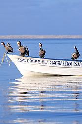 Brown Pelicans On Boat