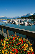 Alaska. Valdez boat harbor with flowers in the foreground and Chugach Mts beyond.