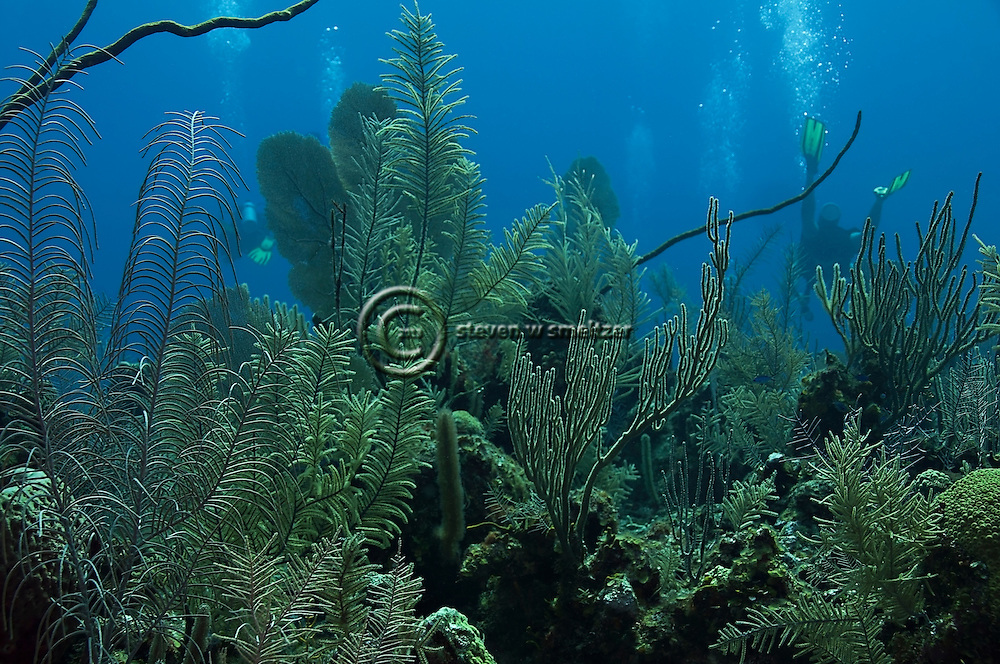 Coral Garden, Grand Cayman
