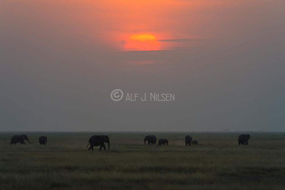 Sunset and elephants in Amboseli National Park, Kenya.