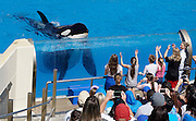 March 17, 2016 - San Diego, California, U.S. - <br /> <br /> A pair of killer whales, or orcas, jump as they perform during the Shamu's One Ocean show at SeaWorld in San Diego on Thursday.  SeaWorld announced Thursday that it's ending its practice of killer whale breeding after years of controversy over keeping orcas in captivity. <br /> ©Exclusivepix Media