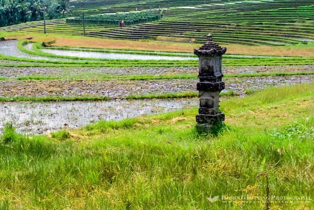 Bali, Tabanan, Kerambitan. Rice terraces in the Kerambitan area.