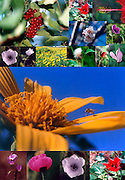 A collage of Israeli wild flowers