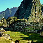South America, Peru, Andes, Andes Mountains, Machu Picchu, Ancient Machu Picchu, last refuge of the vanished Inca civilization in the Andes Mountains, Peru.