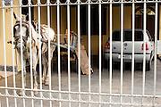 Belo Horizonte_MG, Brasil...Burro em uma garagem...The donkey in the garage...Foto: LEO DRUMOND / NITRO