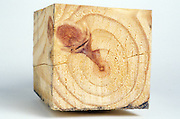 Block of wood with a knot in its center