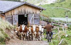 THEMENBILD - der Bergbauer Toni Aberger auf einer Trail von der Fürthermoar Alm mit seinem Kühen, aufgenommen am 09. August 2018 in Kaprun, Österreich // the mountain farmer Toni Aberger on a trail from the Fürthermoar Alm with his cows, Kaprun, Austria on 2018/08/09. EXPA Pictures © 2018, PhotoCredit: EXPA/ JFK