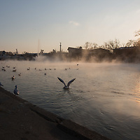 Birds enjoy the heat of City Park Lake's thermal water during the cold winter in Budapest, Hungary on January 10, 2017. ATTILA VOLGYI