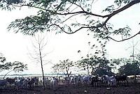 Ganado en corral, Parque Nacional Cinaruco-Capanaparo, Apure, Venezuela,  Apure, Venezuela