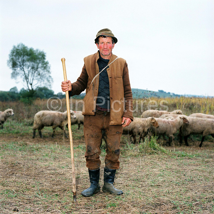 Portrait of a shepherd and his flock of sheep in the Carpathian Mountains, Romania. Whereas in most countries sheep are reared for wool and meat, in Romania these are seen as by-products and the real purpose of the flock is to produce branza or cheese.