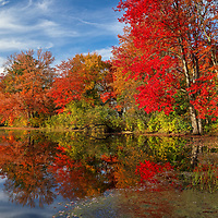 Found brilliant New England fall foliage peak colors at the Factory Pond in Holliston, Massachusetts. This autumn photo was inspired by the red glorious fall colors and pond reflection. The photograph was taken at the site where the Darling Woolen Mill stood. The mill was lost to a ire in 1933. <br />