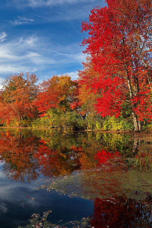 Found brilliant New England fall foliage peak colors at the Factory Pond in Holliston, Massachusetts. This autumn photo was inspired by the red glorious fall colors and pond reflection. The photograph was taken at the site where the Darling Woolen Mill stood. The mill was lost to a ire in 1933. <br /> <br /> Factory Pond photography images are available as museum quality photo, canvas, acrylic, wood or metal prints. Wall art prints may be framed and matted to the individual liking and interior design decoration needs:<br /> <br /> https://juergen-roth.pixels.com/featured/holliston-massachusetts-juergen-roth.html<br /> <br /> Good light and happy photo making!<br /> <br /> My best,<br /> <br /> Juergen<br /> Licensing: http://www.rothgalleries.com<br /> Photo Prints: http://fineartamerica.com/profiles/juergen-roth.html<br /> Photo Blog: http://whereintheworldisjuergen.blogspot.com<br /> Instagram: https://www.instagram.com/rothgalleries<br /> Twitter: https://twitter.com/naturefineart<br /> Facebook: https://www.facebook.com/naturefineart