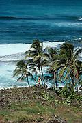 Conch shell blower, Kee, Kauai, Hawaii.