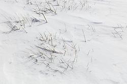 Snow covering Blackland Prairie atMatthews Prairie, owned by the Native Prairies Association of Texas. Farmersville, Texas, USA.