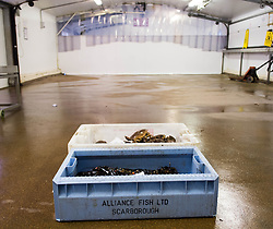 © Licensed to London News Pictures. 03/04/2014<br /> <br /> Whitby, North Yorkshire, United Kingdom<br /> <br /> Fresh crabs and lobster straight from the sea are weighed in the North Yorkshire seaside town of Whitby. <br /> <br /> Photo credit : Ian Forsyth/LNP