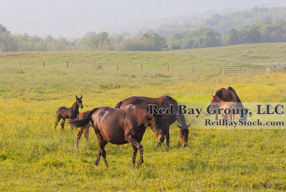Mare and foal in the pasture.