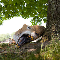 Scary Animal Head on Governor's Island