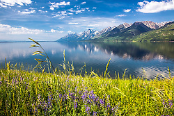 """Jackson Lake reflecting the Grand Teton Range in its calm waters in Grand Teton National Park.<br /> <br /> For production prints or stock photos click the Purchase Print/License Photo Button in upper Right; for Fine Art """"Custom Prints"""" contact Daryl - 208-709-3250 or dh@greater-yellowstone.com"""