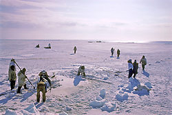 Inupiats Cutting Holes For Rope To Pull Whale