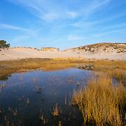 Pool of fresh water hidden in the dunes of Crane Beach, Ipswich, MA