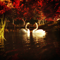 Available as canvas wall art or framed wall art, Swans in a Pond depicts a peaceful scene of nature. We see two swans moving along together. We see the gentle, pristine water. As we stare longer, we begin to take in the rest of the background. The mountains are spectacular. The trees are wise and beautiful. There are some wondrous details to these things. Taken as a whole, this is an image we would love to come across in our own day to day lives. We would love the chance to sit somewhere nearby, take in the perfect weather, and watch the swans in the pond. .<br /> <br /> BUY THIS PRINT AT<br /> <br /> FINE ART AMERICA<br /> ENGLISH<br /> https://janke.pixels.com/featured/swans-in-a-pond-jan-keteleer.html<br /> <br /> <br /> WADM / OH MY PRINTS<br /> DUTCH / FRENCH / GERMAN<br /> https://www.werkaandemuur.nl/nl/shopwerk/Dierenrijk---Zwanen-in-een-vijver/437690/134