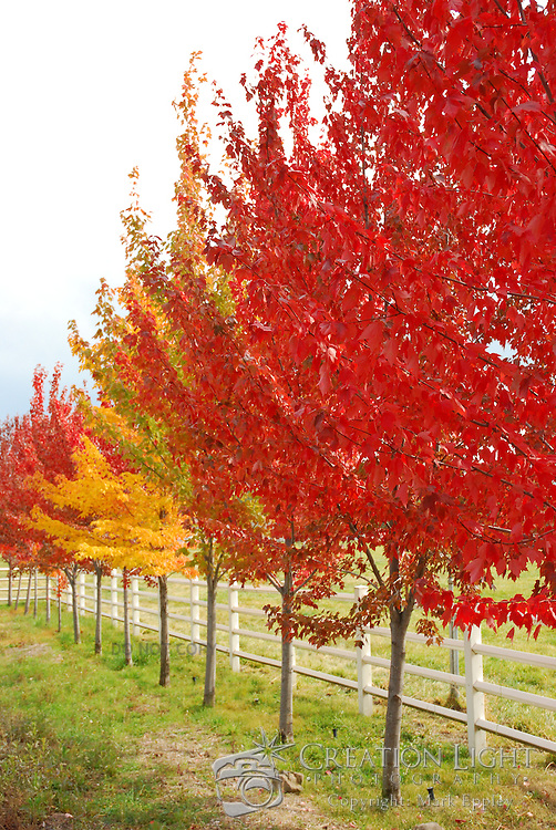 The bright color of the autumn leaves still on trees in Southern Oregon.