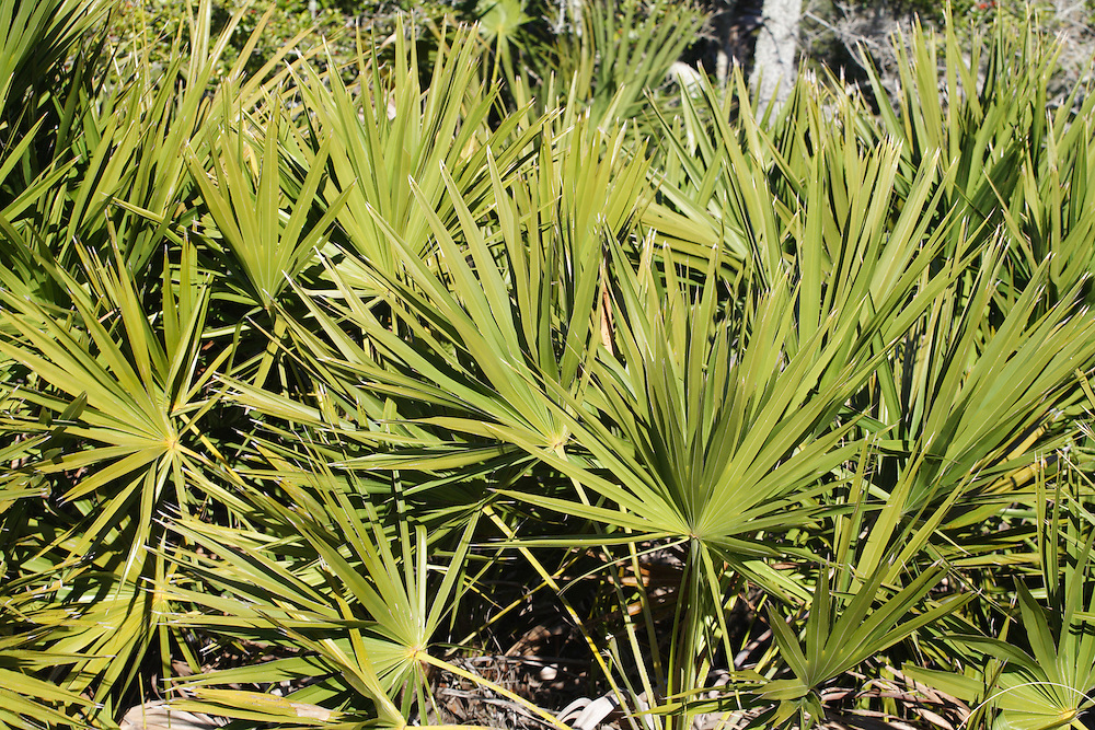 St. Joseph Peninsula State Park, Gulf County Florida,