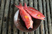 Freshly caught local fish (grouper) at a restaurant on Gili Sudak, Lombok, Indonesea