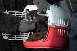 """© Licensed to London News Pictures. 16/11/2019. Bolton, UK. Residents rescue their pet cat """" Ace """" at the site of the blaze where a fire broke out overnight (15th/16th November 2019) at a block of flats known as """" The Cube """" , in Bolton Town Centre . At least two people are known to have been treated by paramedics at the scene of the six-story block , which is occupied by students of the University of Bolton and questions are now being raised about the safety of the high pressure laminate cladding used in the building's construction . Photo credit: Joel Goodman/LNP"""