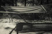 Sugar under the hammock on a hot summer morning