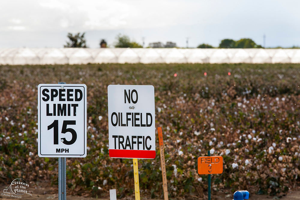 No Oilfield Traffic sign next to cotton field. Kern County, located over the Monterey Shale, has seen a dramatic increase in oil drilling and hydraulic fracking in recent years. San Joachin Valley, California, USA